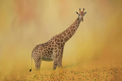 Photograph - Giraffe Strolling Through Field Of Sunflowers by Kay Kochenderfer
