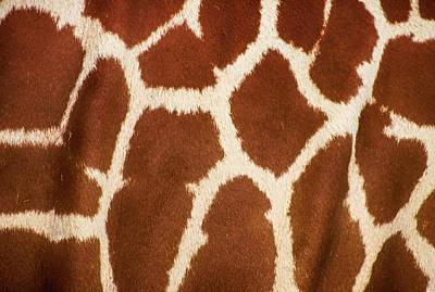 South African Art Photograph - Giraffe Textures by Martin Newman