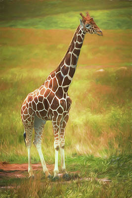 Graceful Photograph - Giraffe by Tom Mc Nemar