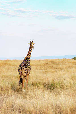 Photograph - Giraffe Walking In Kenya Africa - Vertical by Susan Schmitz