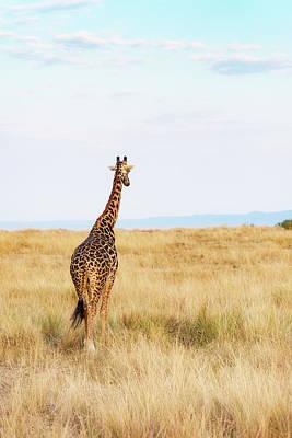 Photograph - Giraffe Walking In Kenya Africa - Vertical by Susan Schmitz