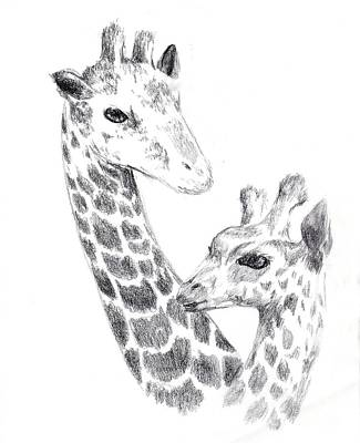 Drawing - Giraffes by Alice Chen