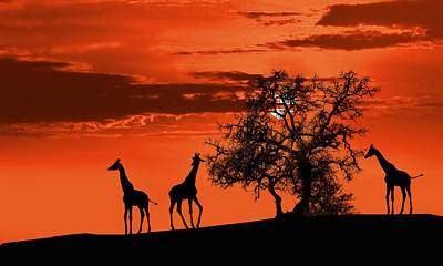 Outdoor Digital Art - Giraffes At Sunset by Jaroslaw Grudzinski