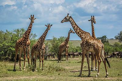 Photograph - Giraffes by Daria Klepikova
