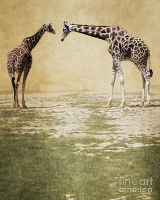 Photograph - Giraffes by Dawn Gari