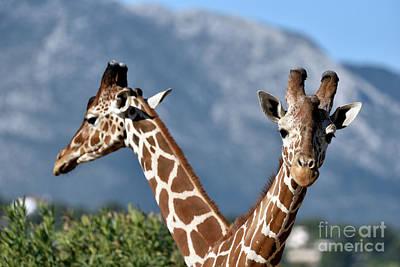 Photograph - Giraffes by George Atsametakis
