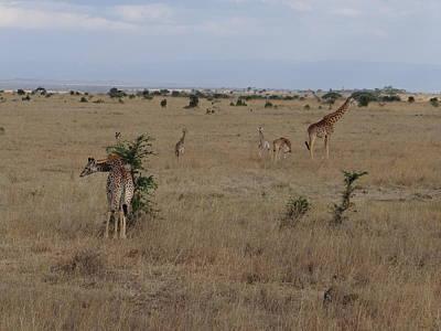 Exploramum Wall Art - Photograph - Giraffes In Nairobi National Park 1 by Exploramum Exploramum