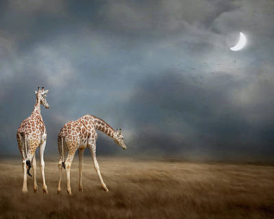 Photograph - Giraffes In The Moonlight by Rebecca Cozart