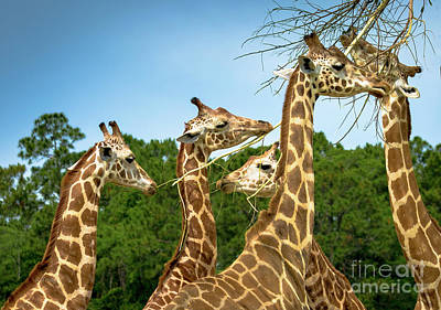 Photograph - Gentle Giants by Rene Triay Photography