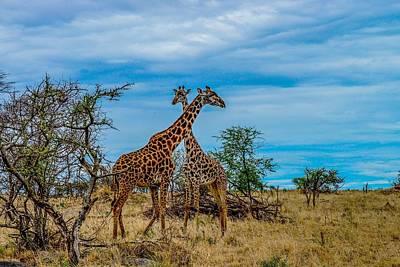 Photograph - Giraffes On The Serengeti by Marilyn Burton