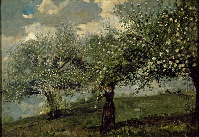 Winslow Homer Painting - Girl Picking Apple Blossoms by Winslow Homer