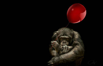 Chimpanzee Photograph - Girl With Red Balloon by Paul Neville