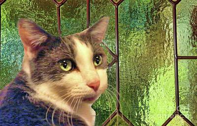 Photograph - Girlie And The Green Stained Glass by Janette Boyd