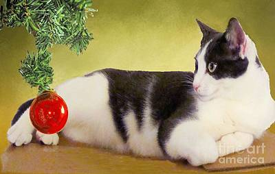Photograph - Girlie The Cat At Christmas by Janette Boyd
