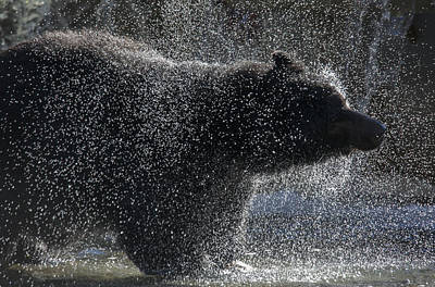 Photograph - Bear Spray by Randy Hall