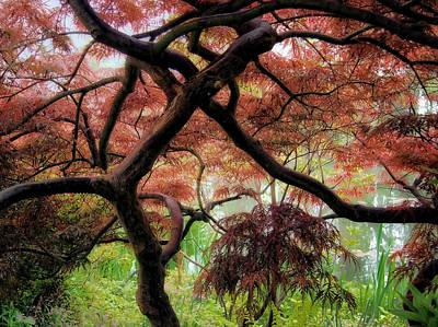 Giverny Gardens Art Print by Jim Hill