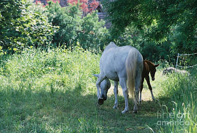 Giverny Mare And Foal Landscape Art Print by Nadine Rippelmeyer