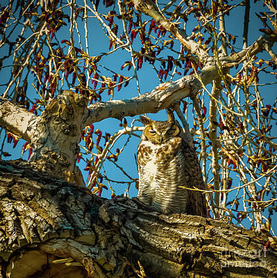 Photograph - Gives A Hoot by Jon Burch Photography
