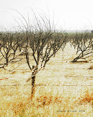 Photograph - Giving Up - The Drought In California Central Valley Taking It's Toll On Trees And Farmers by Artist and Photographer Laura Wrede