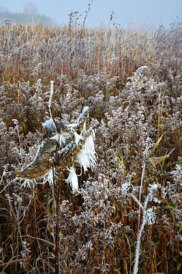 Photograph - Glacial Park Frosted Wildflowers by Ray Mathis