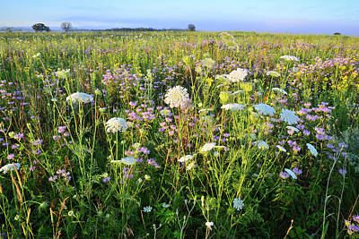 Photograph - Glacial Park Wildflower Prairie by Ray Mathis