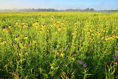 Photograph - Glacial Park Wildflowers At Sunrise by Ray Mathis