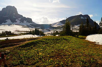 The Champagne Collection - Glacier Lilies and Glaciers by Beth Collins