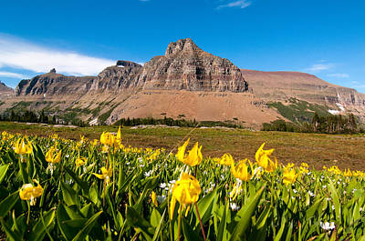 Photograph - Glacier Lilies At Logan Pass by Steve Stuller