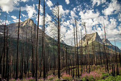 Photograph - Glacier National Park Burt Out Trees by John McGraw