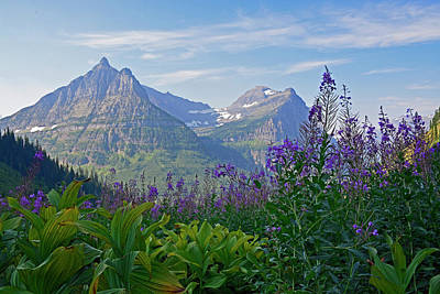 Photograph - Glacier National Park Fireweed by Bruce Gourley