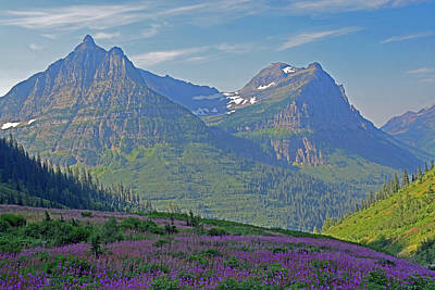 Photograph - Glacier National Park Fireweed Slope by Bruce Gourley