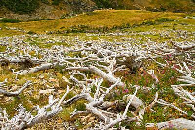 Photograph - Glacier National Park Montana by Waterdancer