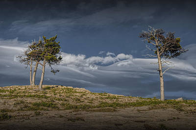 Photograph - Glacier National Park Pine Trees On A Rocky Ridge by Randall Nyhof