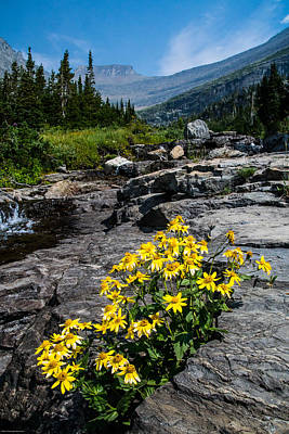 Photograph - Glacier Park Wildflowers by Mick Anderson