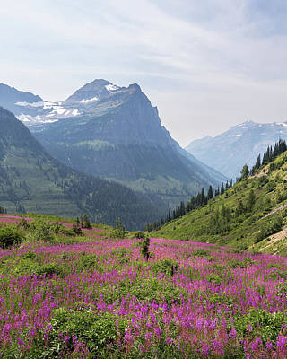 Photograph - Glacier Wildflowers by Penny Meyers
