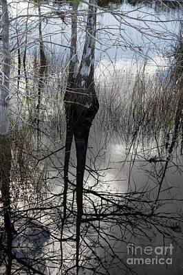 Photograph - Glades 5 by Richard Smukler