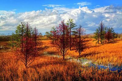 Photograph - Glades Evening Shadows by Debra and Dave Vanderlaan
