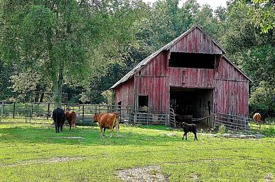 Photograph - Gladeville Farm by Jan Amiss Photography