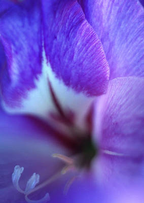 Gladiola Close-up Art Print by Kathy Yates