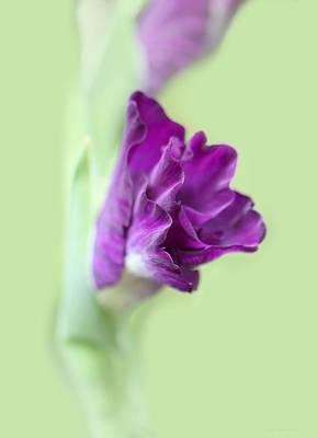 Photograph - Gladiola Flower Beginnings by Jennie Marie Schell