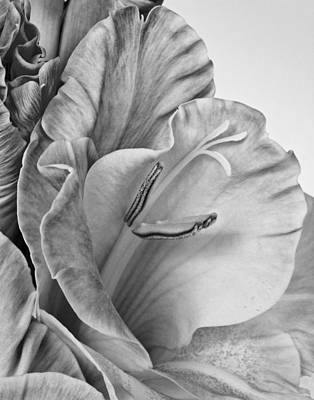 Photograph - Gladiola In Grays by David and Carol Kelly