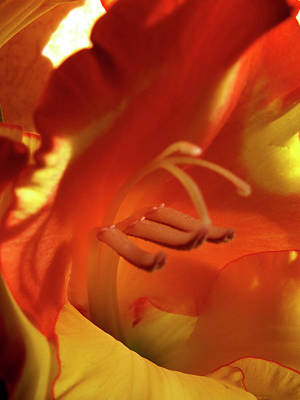 Photograph - Gladiola Interior by Nancy Griswold