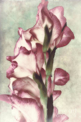 Macro Painting - Gladiola by Mindy Sommers