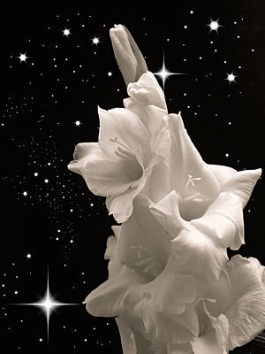 Photograph - Gladiolas In Space by Farol Tomson