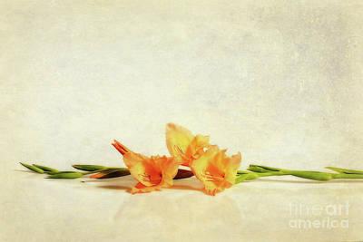 Photograph - Gladioli Art By Kaye Menner by Kaye Menner