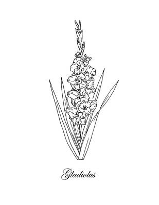 Drawing - Gladiolus. Botanical by Masha Batkova