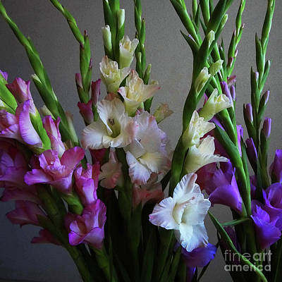 Photograph - Gladiolus By The Window by Gem S Visionary