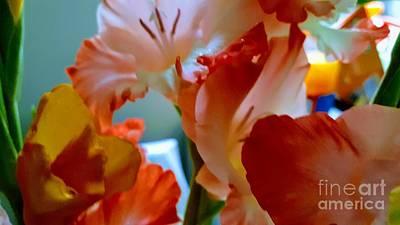 Photograph - Gladiolus Drama Mix by Rachel Hannah