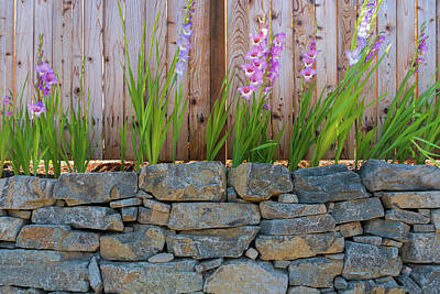 Wall Art - Photograph - Gladiolus Flowers Along Garden Fence by David Gn
