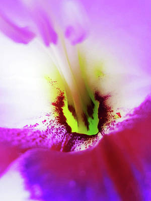 Photograph - Gladiolus by Tiffany Erdman